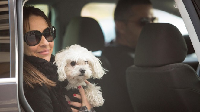 Naxis Taxi petfriendly